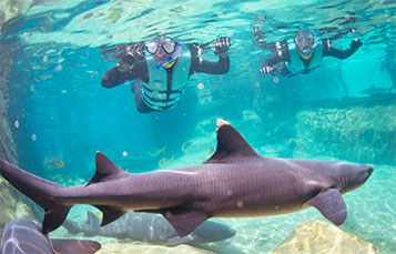 All-Inclusive Family Resort in Orlando, Florida | Discovery Cove on