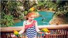 Feed birds in the Explorer's Aviary at Discovery Cove Orlando