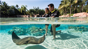 Feed Stingrays at Discovery Cove Orlando