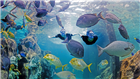 Explore around the Grand Reef at Discovery Cove Orlando