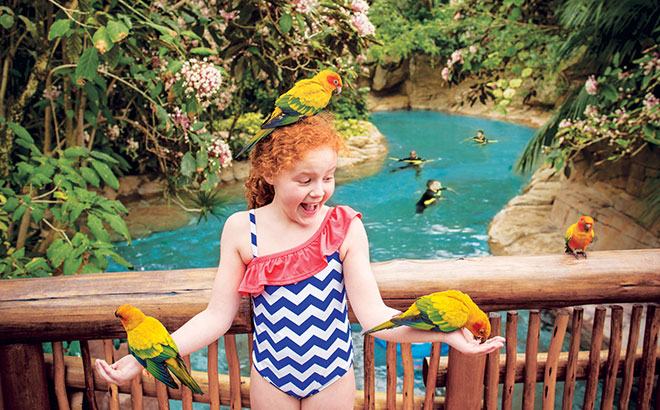 Get up close to tropical birds at the free-flight aviary at Discovery Cove.