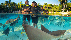 Discovery Cove Included Experiences