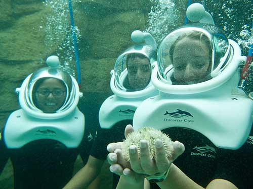 Take an underwater tour with SeaVenture at Discovery Cove.